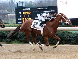 Apprehender wins the 2013 King Cotton Stakes.