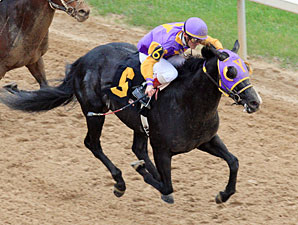 ArchArchArch in the 2011 Southwest Stakes.