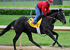 Archarcharch to Stand at Spendthrift in 2012