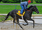 Injured Archarcharch Retired, Owner Says