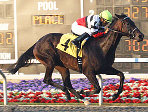 Ariana D Named Highweight in Chicago Handicap