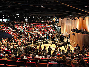 New Arqana Yearling Sale Set for Aug. 20