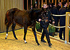 Redoute's Choice Weanling Tops Arqana Session