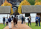 Arqana Opens With Record Sales, Median Rise