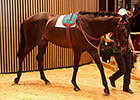 Two Share Record Price at Arqana Summer Sale