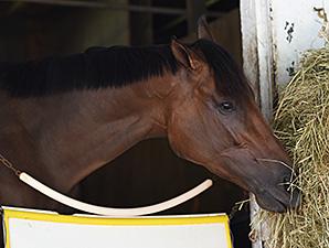 Artemis Agrotera at Saratoga 8/24/2014.