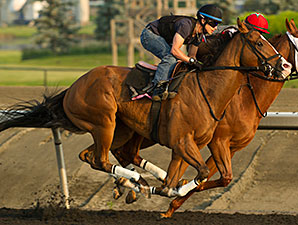 Athenian Guard jogs at Woodbine Racetrack in preparation for the 2014 Queen's Plate.