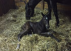 Atreides' First Foal is a Filly