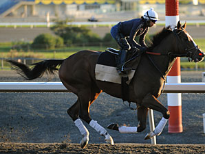 Auteur at Woodbine on September 13, 2010.