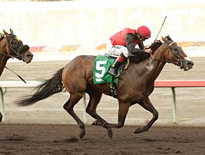 Avare wins the 2013 Pomona Derby.