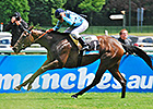 Unbeaten Avenir Certain Takes French Classic