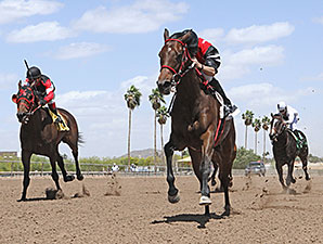 Aware wins the 2014 Joanne Dye Stakes.