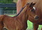 First Reported Foal for Awesome Bet