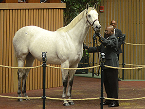 Awesome Maria at the Keeneland November Sale.