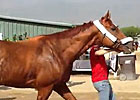 Breeders&#39; Cup - Wise Dan Arrives