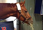 Breeders&#39; Cup - Wise Dan Settles In