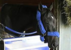 Breeders' Cup News Update for Oct 29, 2014