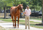 Fasig-Tipton July Sale Preview