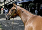 Saratoga Sale 2012: Galileo Yearlings