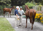 Saratoga Sale 2012: Starlight Racing