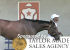Fasig-Tipton Feature - The Heiligbrodts