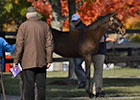 Fasig-Tipton November Sale 2013 Preview