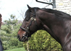 Past Ky Derby Winners: Fusaichi Pegasus 