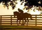 Three Chimneys Stallions Morning Exercise