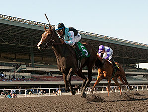 Bajan wins the 2013 Moccasin Stakes.