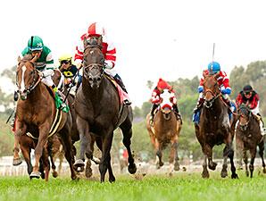 Bal a Bali wins the 2015 American Stakes.