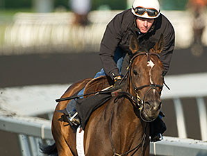 Bangkok galloped at Woodbine Racetrack on August 11, 2014 in preparation for the Breeders' Stakes.