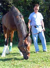 Barbaro's Latest Setback Forced Risky Surgery
