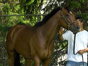 Barbaro at Churchill Downs, May 3, 2006.