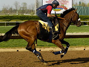 Barbaro at Keeneland, April 15, 2006.