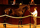 Bertrando Yearlings Top Barretts&#39; First Day