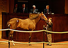 Twirling Candy Colt Tops Barretts Auction