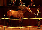 Business Booms at Barretts 2YO Sale