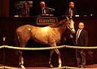 Coolmore Buys Dunkirk Colt for $575,000