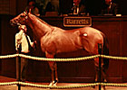 Into Mischief Colt Brings $320K at Barretts