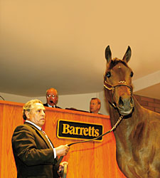 Solid Juvenile Contingent to Sell at Barretts