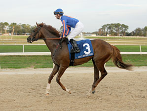 Battle Hardened Breezes at Palm Meadows