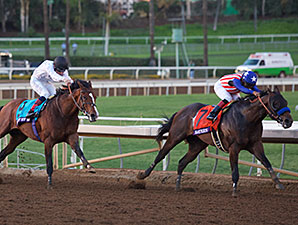 Bayern and Toast of New York in the Breeders' Cup Classic.