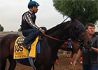 Breeders' Cup 2014: Hanging With Bayern