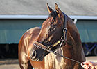 Breeders' Cup Classic Winner Bayern Retired