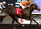Bear Stables Trio Entered in Nearctic Stakes