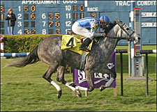 Bedanken Queen of Bayou Breeders' Cup