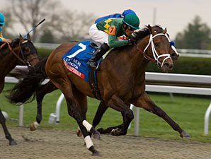 Seven Confirmed for Preakness