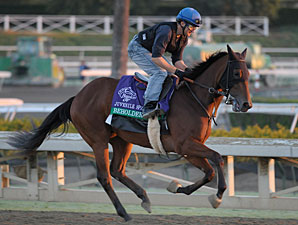 Beholder at Santa Anita 10/29/2012.