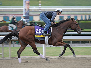 Stellar Team Behind Beholder's Success