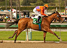 Champ Beholder Back in Form for &#39;Virgenes Win